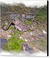 Frog Eating A Worm Canvas Print by Susan Leggett