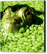 Frog Eye's Canvas Print by Optical Playground By MP Ray