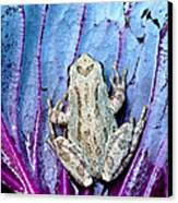 Frog On Cabbage Canvas Print by Jean Noren
