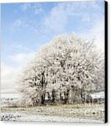 Frosted Copse Canvas Print by Anne Gilbert