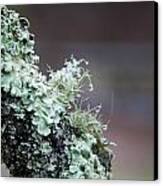 Frosted Moss Canvas Print by Mary Katherine Powers