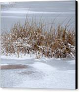 Frozen Reeds Canvas Print by Julie Palencia