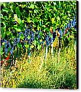 Fruit Of The Vine Canvas Print by Kay Gilley