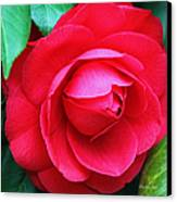 Fuchsia Camellia In Pastel Canvas Print by Suzanne Gaff