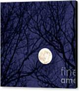 Full Moon Bare Branches Canvas Print by Thomas R Fletcher