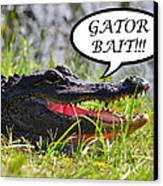 Gator Bait Greeting Card Canvas Print by Al Powell Photography USA