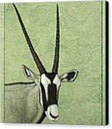 Gemsbok Canvas Print by James W Johnson