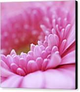 Gerbera Daisy Flower - Pink Canvas Print by Natalie Kinnear