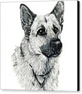 German Shepherd Canvas Print by Terri Mills