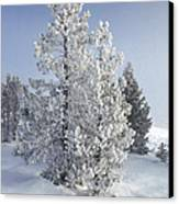 Ghost Trees Of Yellowstone Canvas Print by Sandra Bronstein