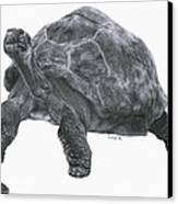 Giant Tortoise Canvas Print by Lucy D