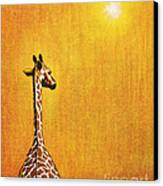 Giraffe Looking Back Canvas Print by Jerome Stumphauzer