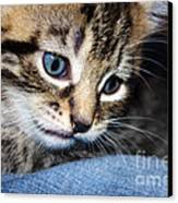 Gizmo Feeling Blue Canvas Print by Terri Waters