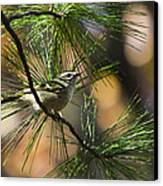 Golden-crowned Kinglet Canvas Print by Christina Rollo