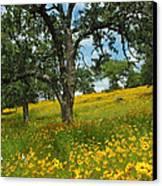 Golden Hillside Canvas Print by Robert Anschutz