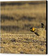 Golden Light On The Prairie Canvas Print by Thomas Young