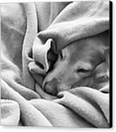 Golden Retriever Dog Under The Blanket Canvas Print by Jennie Marie Schell