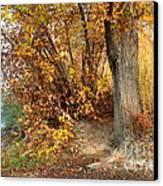 Golden Riverbank Canvas Print by Carol Groenen