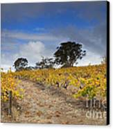 Golden Vines Canvas Print by Mike  Dawson