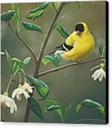 Goldfinch And Snowbells Canvas Print by Peter Mathios