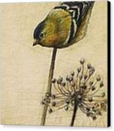 Goldfinch Canvas Print by Lori  McNee