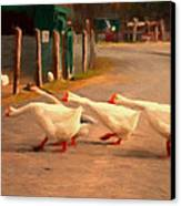 Goose Crossing Canvas Print by Michael Pickett