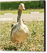 Goose Goose Canvas Print by Artist and Photographer Laura Wrede