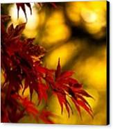 Graceful Leaves Canvas Print by Mike Reid