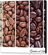 Grades Of Coffee Roasting Canvas Print by Jane Rix