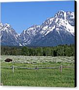Grand Teton Buffalo Canvas Print by Brian Harig