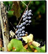 Grape Harvest Canvas Print by Neal  Eslinger