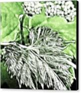 Grape Vine Leaf Canvas Print by Odon Czintos