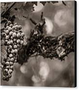 Grapes In Grey 1 Canvas Print by Clint Brewer