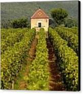Grapevines. Premier Cru Vineyard Between Pernand Vergelesses And Savigny Les Beaune. Burgundy. Franc Canvas Print by Bernard Jaubert