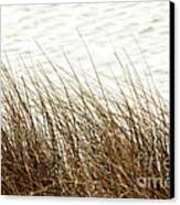 Grass Down By The Shore Of Virginia Beach Canvas Print by Artist and Photographer Laura Wrede