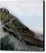 Grasshopper Resting Canvas Print by Cynthia Adams