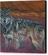 Gray Wolf Canvas Print by Tom Blodgett Jr