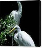 Great Egret Pair Canvas Print by Skip Willits
