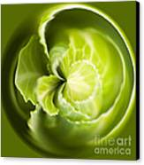 Green Cabbage Orb Canvas Print by Anne Gilbert