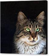 Green Eyes Canvas Print by Stelios Kleanthous