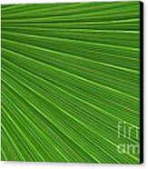 Green Palm Abstract Canvas Print by Kathleen Struckle