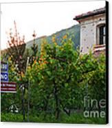 Green Vineyards Canvas Print by Sarah Christian