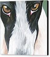 Greyhound Eyes Canvas Print by Leslie Manley