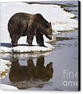 Grizzly Bear Reflected In Water Canvas Print by Mike Cavaroc