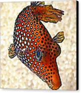 Guinea Fowl Puffer Fish Canvas Print by Bill Caldwell -        ABeautifulSky Photography