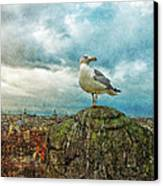 Gull Over Rome Canvas Print by Jack Zulli