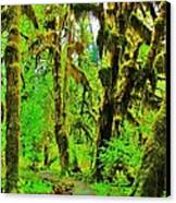Hall Of Moss Canvas Print by Benjamin Yeager