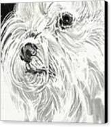 Harley The Maltese Canvas Print by Linda Minkowski