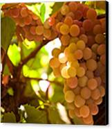 Harvest Time. Sunny Grapes IIi Canvas Print by Jenny Rainbow