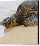 Hawaiian Green Sea Turtle 3 Canvas Print by Brian Harig